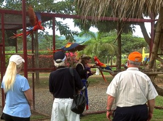 Guests enjoying our tour of the inside of a parrot show