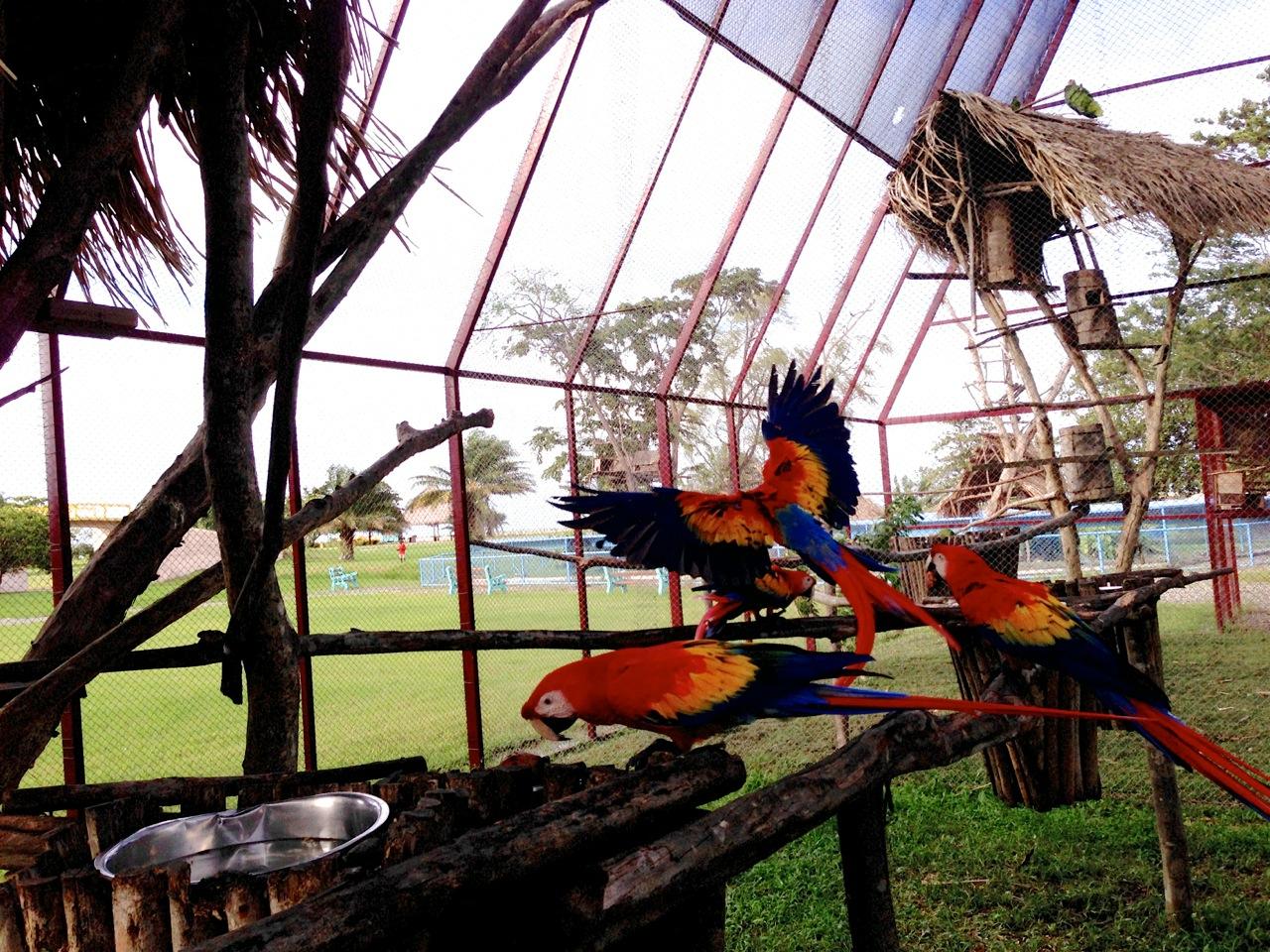 Scarlet Macaw Project in Honduras