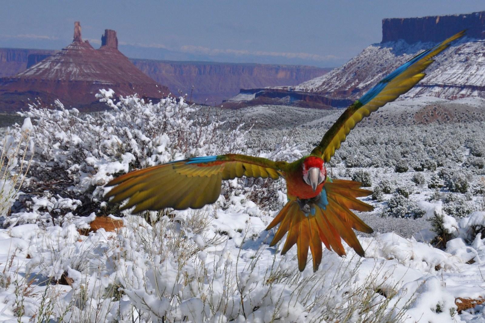 bird7